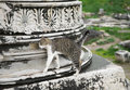 Free Cat In Ephesus Stock Image - 34870641