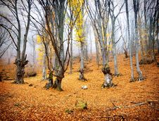 Free Fairy Autumn Forest Royalty Free Stock Photo - 34883615