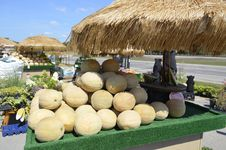Cantaloupe For Sale Stock Photography