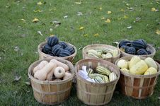 Free Baskets Full Of Squash Stock Photography - 34889712
