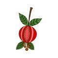 Free Berry Dog-rose Isolated On White Background Stock Photography - 34891112