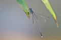 Free Damselfly Resting On Branch Royalty Free Stock Photo - 34899425