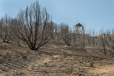 Free Burned Hillside Of Trees Royalty Free Stock Images - 34890629