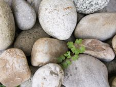 Stone Pebbles And The Fresh Green Plant Stock Photography