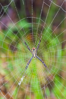 Free Spider Royalty Free Stock Photography - 34899747