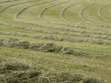 Free Hay Raked Into Rows Stock Photography - 34899772