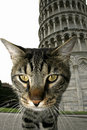 Free Cat And Pisa Tower Royalty Free Stock Photo - 3494555