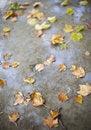 Free Rain Droplet Splash Royalty Free Stock Photo - 3498825