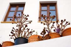 Free Potted Plants Royalty Free Stock Photography - 3490157