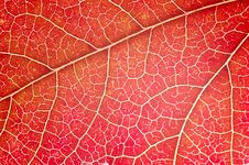 Free Leaf Close-up Royalty Free Stock Photography - 3490887