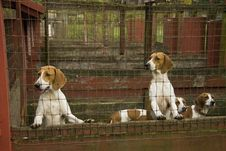 Free Blood Hound Dogs Royalty Free Stock Photos - 3490908