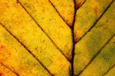 Free Leaf Close-up Stock Photography - 3490922