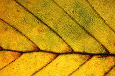 Free Leaf Close-up Stock Photo - 3491000