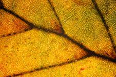 Free Leaf Close-up Stock Photos - 3491013