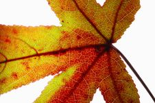 Free Leaf Close-up Stock Images - 3491034