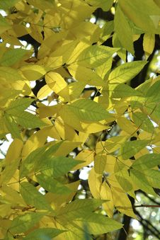 Free Autumn Leaves Royalty Free Stock Photography - 3491407
