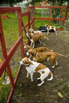Free Blood Hound Dogs Royalty Free Stock Images - 3491629