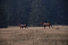 Show Horse Hunt Club Royalty Free Stock Images