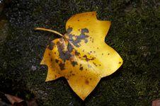 Free Moss Stock Photo - 3492790