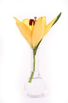 Free Orange Lilly Flower On White B Royalty Free Stock Image - 3496026