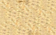 HQ Bark Of Birch Texture Stock Photo