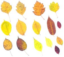 Free Composite Of Autumn Leaves Royalty Free Stock Photos - 3497698
