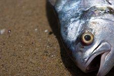 Free Fresh Fish Royalty Free Stock Images - 3498159