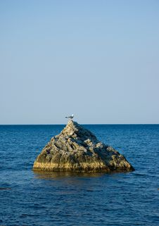 Free Seagull On Rock Royalty Free Stock Photography - 3499337