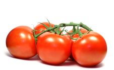 Free Tomatoes Royalty Free Stock Image - 3499906