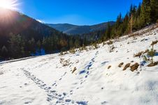Free Snowy Road To Coniferous Forest In Mountains Royalty Free Stock Photo - 34902085