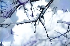 Free Branch With Snow Royalty Free Stock Images - 34907519