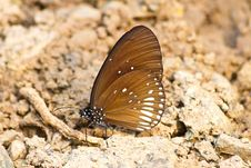 Free Butterflies Royalty Free Stock Photo - 34912715