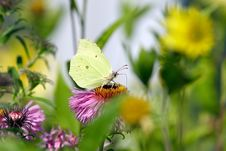 Free Butterfly In Garden Stock Images - 34914474