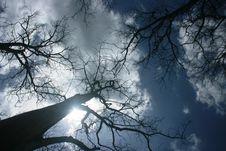 Free Deciduous Teak Trees Royalty Free Stock Photo - 34916425