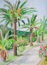 Free Palm Royalty Free Stock Photo - 34923925