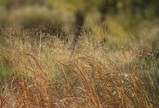 Free Prairie Grass Background Royalty Free Stock Photography - 34921777