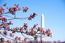Cherry Blossom Festival Washington DC Stock Photos