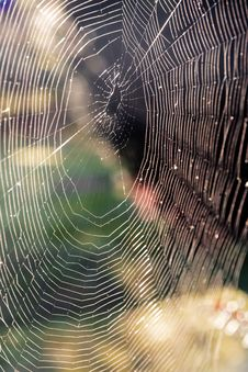 Free Spider Web Stock Image - 34930251