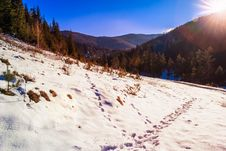 Free Snowy Road To Coniferous Forest In Mountains Stock Photography - 34931712