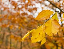 Free Yellowing Leaves Stock Images - 34934564