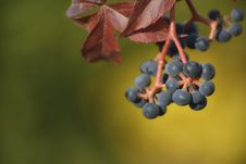 Free Berries Stock Photography - 34934832