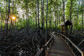 Free Boardwalk In Mangrove Forest Royalty Free Stock Photo - 34945795