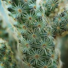 Free Closeup Of Beautiful Cactus Royalty Free Stock Photo - 34942555