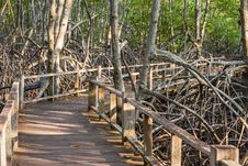 Free Boardwalk In Mangrove Forest Royalty Free Stock Images - 34943179