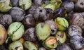 Free Coconut Stock Photo - 34952230