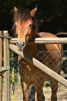 Free Brown Horse Royalty Free Stock Photo - 34960075