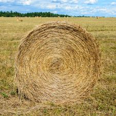 Free Round MOP Of Straw Royalty Free Stock Photo - 34961695