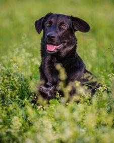 Free Black Dog Stock Photo - 34964290