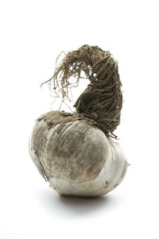 Free Organic Garlic Stock Photo - 34965120