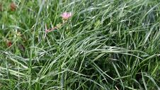 Free Video Of Grass Blowing In The Wind Royalty Free Stock Photos - 34965838